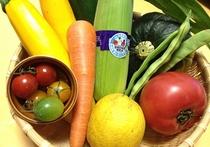 食材(野菜)