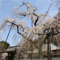 清雲寺(昼間)