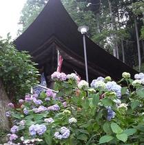 札所3番の紫陽花