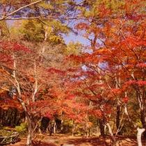 月の石もみじ公園の紅葉(11月中旬〜下旬・車で約15分)