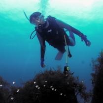 Diver1
