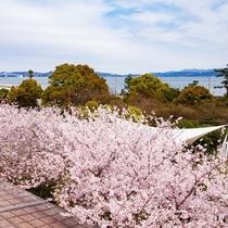 本館からの桜の景観