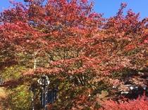 龍王峡の紅葉見ごろは11月上旬から下旬まで