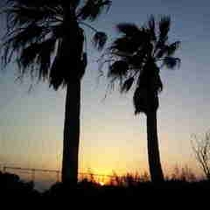 椰子の木と夕日