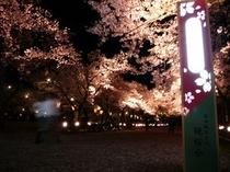 高田夜桜07-1
