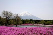 芝桜と富士山