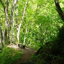 2015年 初夏の森林浴