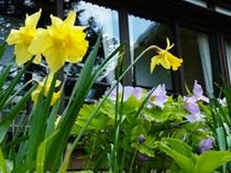 四季ページ用(春1)…水仙と白根葵