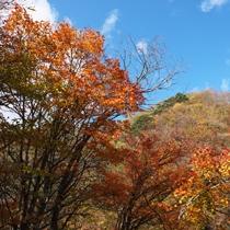 プラン用紅葉景色