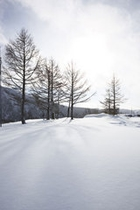 四季ページ(冬2)…天元台高原木立