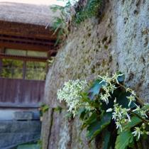 プラン用(9月西屋の庭)