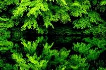 雲場池の春