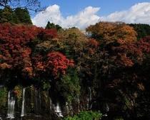 白糸の滝の紅葉