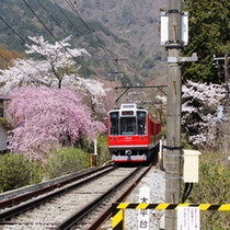*桜と箱根登山鉄道