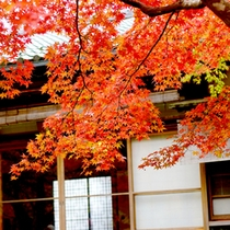 *紅葉 (箱根美術館敷地内)