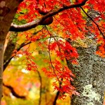 *風情のある紅葉シーズン