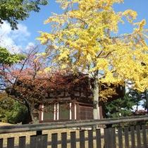 銀杏と北円堂