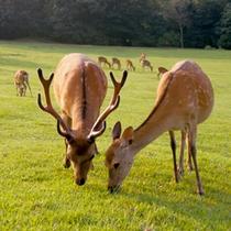 *当館からすぐ♪かわいい鹿が沢山いる奈良公園。