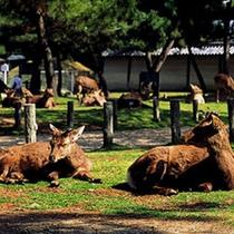 *なら公園も徒歩すぐ♪かわいい鹿が沢山いますよ〜♪