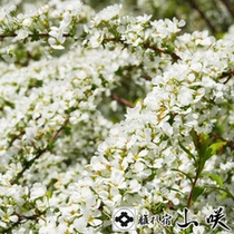 【館内を彩る花たち】