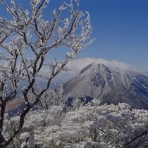 *【鶴見岳の霧氷】(女将撮影)