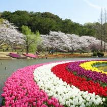 はままつフラワーパーク★桜とチューリップの競演♪