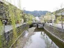 城崎の春〜柳