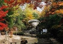 紅葉 傘岩