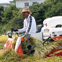 楽天-稲刈り500
