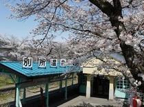別所温泉駅の桜