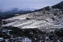 丸山千枚田(冬)