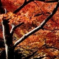 秋はイベントが盛りだくさんの足利市へようこそ!