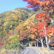 色づく紅葉や山々。例年見頃は11月中旬です。(写真はイメージです)