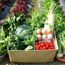 地元無農薬野菜