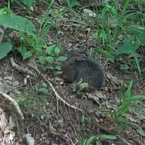 トレッキングで野ウサギに会えるも・・・