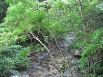 奥深い緑と自然豊かなやんばるの森・・・やんばるツアー
