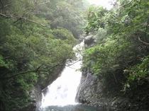 やんばるの森・・・比地大滝!森林セラピーロード!