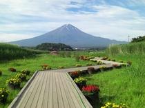【四季の富士】大石公園の夏の富士