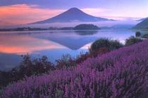 6月からのラベンダーフェスタと富士
