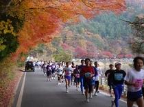 【イベント】11月の日刊マラソン