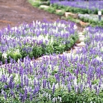 ■敷地内に咲く花々