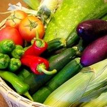 ●瑞々しい野菜たち