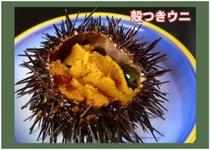 季節のお料理(殻つきウニ)