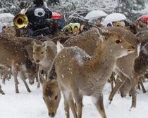 【観光】冬の鹿よせ
