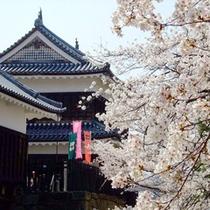 *上田城桜