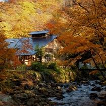 *秋は美しく紅葉に色づきます