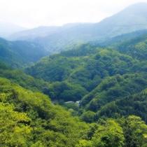 *美しい緑の景色が広がります