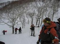 treelife_snowshoe1