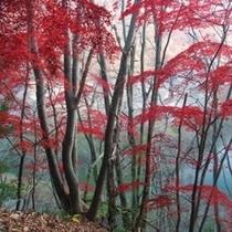【秋*紅葉】
