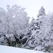 【冬*雪景色】
